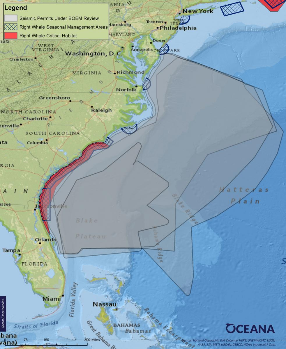 Overlap of Proposed Seismic Airgun Blasting Areas and Critical Habitat for North Atlantic Right Whales (Image: Oceana)