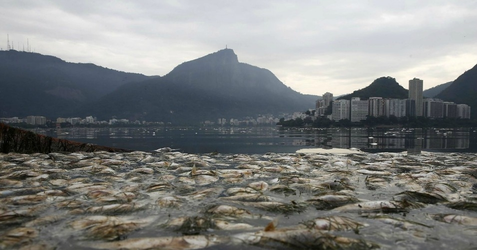 Thousands of dead fish float in the Rodrigo de Freitas lagoon, where the Olympics rowing and canoeing competitions will take place, in 2015. (Photo: Marcelo Sayao/EPA)