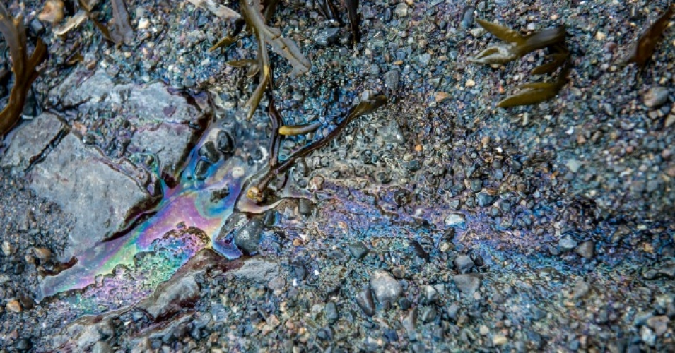 Diesel leaches into tidal pools after a spill in the Great Bear Rainforest last month. (Photo: April Bencze/Heiltsuk Nation)