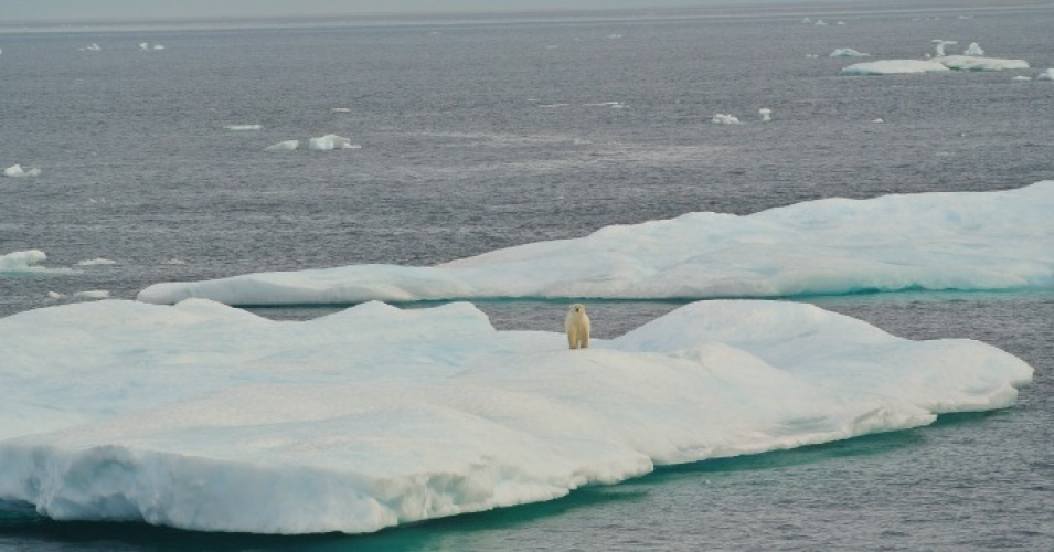 Ice floe with polar bear in Beaufort Sea. (Photo: NOAA Photo Library)